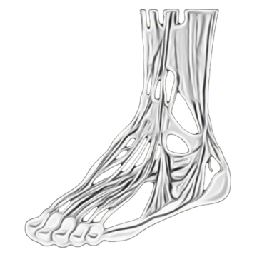 Complex Adult Foot & Ankle Reconstruction